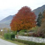 l' autunno è cambiamento